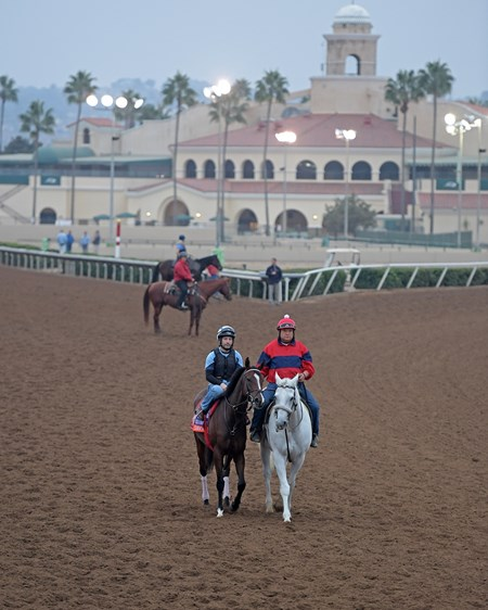Cambodia Breeders' Cup horses on track at Del Mar racetrack on Oct. 29, 2017 Del Mar Thoroughbred Club in Del Mar, CA.