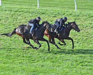 Lady Aurelia (inside) works with Master Merion at Keeneland
