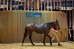 Lot 147, a filly by Dabirsim, sells for €500,000 during the opening day of the Arqana October yearling sale