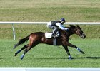 Daddys Lil Darling works over the turf course at Keeneland in October