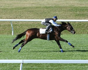 Daddy Lil Darling works over the turf course at Keeneland in October
