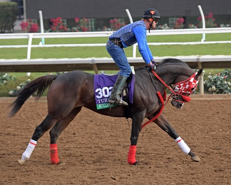Bullards Alley Breeders' Cup horses on track at Del Mar racetrack on Oct. 28, 2017 Del Mar Thoroughbred Club in Del Mar, CA.