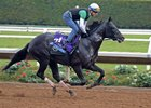 Unbeaten Breeders' Cup Juvenile contender The Tabulator gallops Oct. 28 at Del Mar