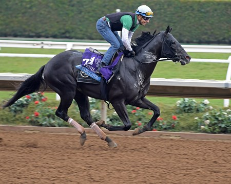 The Tabulator Breeders' Cup horses on track at Del Mar racetrack on Oct. 28, 2017 Del Mar Thoroughbred Club in Del Mar, CA.