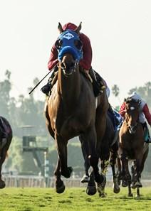 Sharp Samurai Horse Profile Bloodhorse