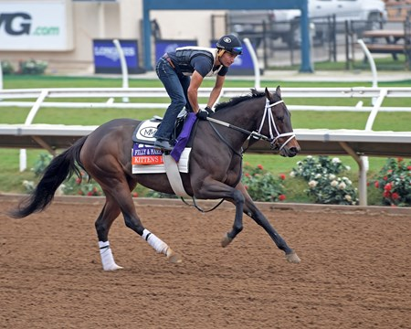 Kitten's Roar Breeders' Cup horses on track at Del Mar racetrack on Oct. 28, 2017 Del Mar Thoroughbred Club in Del Mar, CA.