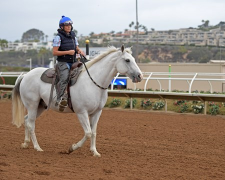 pony with Bridleless Wyatt Breeders' Cup horses on track at Del Mar racetrack on Oct. 30, 2017 Del Mar Thoroughbred Club in Del Mar, CA.