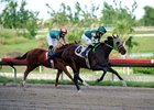 Justiciero wins the Clasico del Caribe qualifier Oct. 29 at Camarero