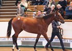 Tattersalls' sale-topping Galileo filly, who sold for 4,000,000 guineas ($5,563,320)