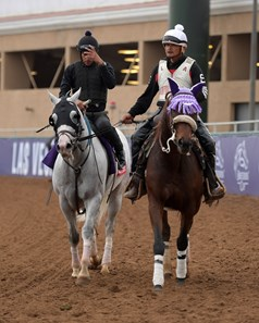 Calculator Breeders' Cup horses on track at Del Mar racetrack on Oct. 30, 2017 Del Mar Thoroughbred Club in Del Mar, CA.