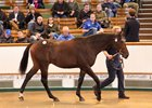 This Dubawi colt (Lot 222) topped the Oct. 4 session during Book 1 of the Tattersalls October yearling sale