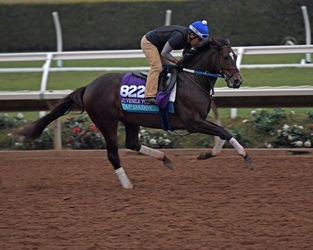 Tap Daddy Breeders' Cup horses on track at Del Mar racetrack on Oct. 28, 2017 Del Mar Thoroughbred Club in Del Mar, CA.