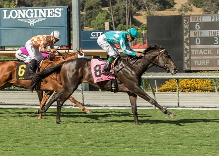 My Boy Jack wins the 2017 Zuma Beach Stakes