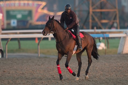Flamboyant gallops under exercise rider Calvin Giles at Woodbine on October 10, 2017