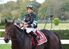 Jockey Club Gold Cup winner Diversify breezed Oct. 28 at Belmont Park toward a possible start in the Breeders' Cup Classic at Del Mar
