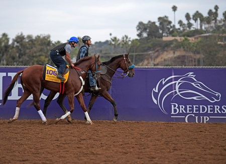 Gunnevera Breeders' Cup horses on track at Del Mar racetrack on Oct. 30, 2017 Del Mar Thoroughbred Club in Del Mar, CA.