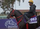 Sharp Azteca at Del Mar, where he finished second in the Breeders' Cup Dirt Mile