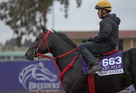 Sharp Azteca Breeders' Cup horses on track at Del Mar racetrack on Oct. 30, 2017 Del Mar Thoroughbred Club in Del Mar, CA.