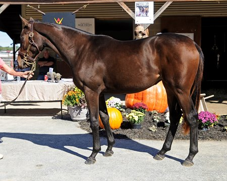 Hip 230, a Flatter filly, sold to John Hall as agent for Alan Burkhard