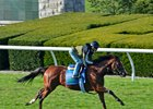Oscar Performance