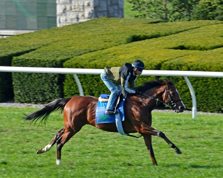 Oscar Performance works  in 51.40 at Keeneland on Oct. 22, 2017