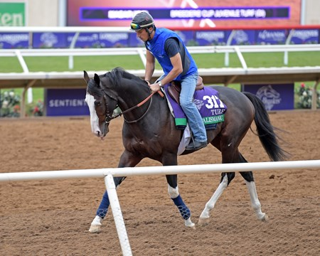 Talismanic Breeders' Cup horses on track at Del Mar racetrack on Oct. 30, 2017 Del Mar Thoroughbred Club in Del Mar, CA.