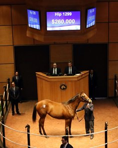 Hip 1299, a filly by Into Mischief, brought $260,000