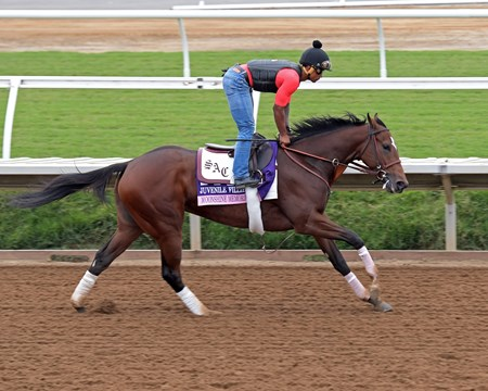 Moonshine Memories Breeders' Cup horses on track at Del Mar racetrack on Oct. 29, 2017 Del Mar Thoroughbred Club in Del Mar, CA.