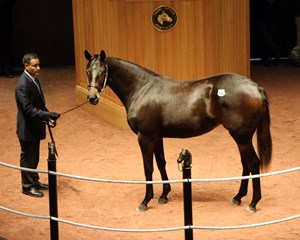 Samantha Siegel of Jay Em Ess Stable went to $275,000 for Hip 96, a daughter of Ghostzapper