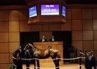 A Sky Mesa colt consigned as Hip 886 sells for $270,000 at Fasig-Tipton