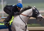 Cupid training at Santa Anita Park Oct. 29 ahead of the Breeders' Cup