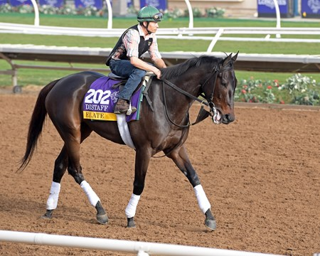 Elate Breeders' Cup horses on track at Del Mar racetrack on Oct. 28, 2017 Del Mar Thoroughbred Club in Del Mar, CA.