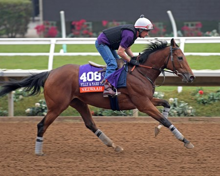 Nezwaah Breeders' Cup horses on track at Del Mar racetrack on Oct. 28, 2017 Del Mar Thoroughbred Club in Del Mar, CA.