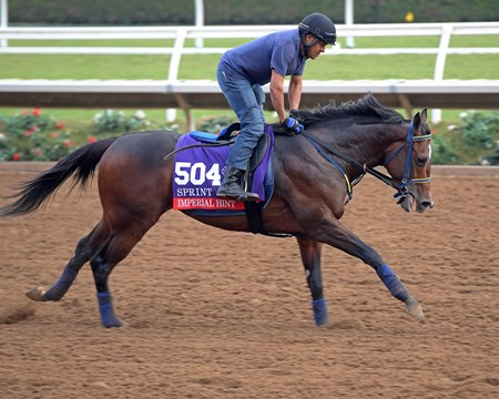 Imperial Hint Breeders' Cup horses on track at Del Mar racetrack on Oct. 28, 2017 Del Mar Thoroughbred Club in Del Mar, CA.