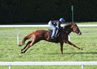 Zipessa works a half-mile on the turf Oct. 27 at Keeneland