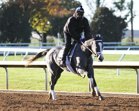 Stainless - Gallop - Keeneland - 10-26-17
