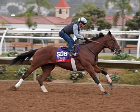 Roy H Breeders' Cup horses on track at Del Mar racetrack on Oct. 31, 2017 Del Mar Thoroughbred Club in Del Mar, CA.