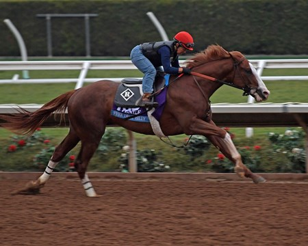 Free Drop Billy with Tammy Fox Breeders' Cup horses on track at Del Mar racetrack on Oct. 28, 2017 Del Mar Thoroughbred Club in Del Mar, CA.