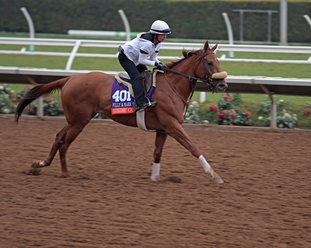Birdie Gold Breeders' Cup horses on track at Del Mar racetrack on Oct. 28, 2017 Del Mar Thoroughbred Club in Del Mar, CA.