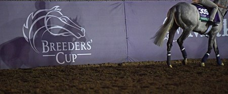 Shadow of Fanciful Angel Breeders' Cup horses on track at Del Mar racetrack on Oct. 30, 2017 Del Mar Thoroughbred Club in Del Mar, CA.