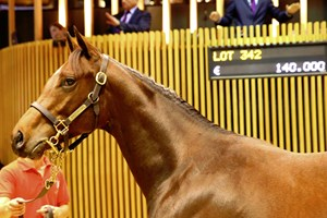 Lot 342, a colt by Siyouni, topped the Oct. 18 session of the Arqana October yearling sale