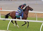Oscar Performance prepares to break off ahead of his Oct. 29 work at Del Mar