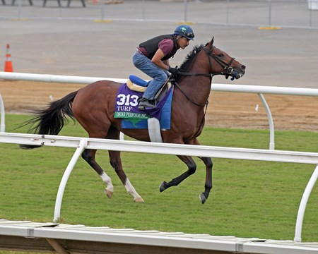 Oscar Performance Breeders' Cup horses on track at Del Mar racetrack on Oct. 29, 2017 Del Mar Thoroughbred Club in Del Mar, CA.