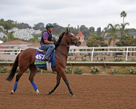 Heart to Heart Breeders' Cup horses on track at Del Mar racetrack on Oct. 30, 2017 Del Mar Thoroughbred Club in Del Mar, CA.