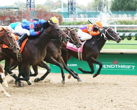 Fight On Sultry Take Spendthrift Stallion Stakes Bloodhorse