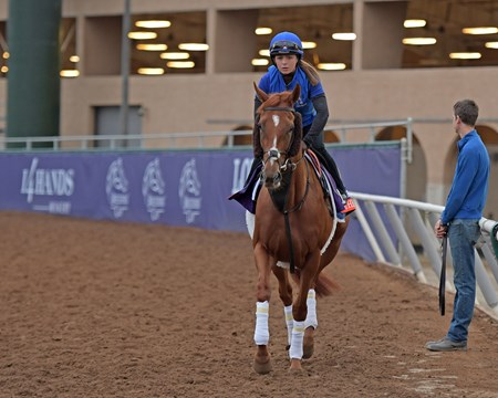 Masar Breeders' Cup horses on track at Del Mar racetrack on Oct. 31, 2017 Del Mar Thoroughbred Club in Del Mar, CA.