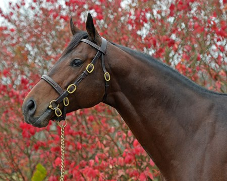 American Freedom at Airdrie. Newly retired stallions for the 2018 breeding season at Central Kentucky farms Nov. 13, 2017  in Lexington, KY.