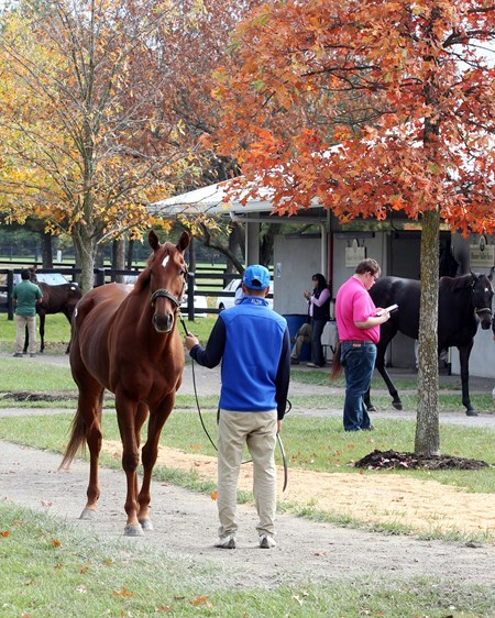 Hip 164, Decked Out, 2017 Fasig-Tipton November Sale