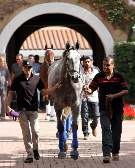 Unique Bella heading to school in the paddock at Del Mar on November 2, 2017.