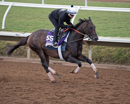 Carina Mia Breeders' Cup horses on track at Del Mar racetrack on Nov. 2, 2017 Del Mar Thoroughbred Club in Del Mar, CA.